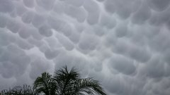 "Dry air under high, thick clouds formed uniquely shaped clouds all over the country during spring heatwave.""They get this shape when clouds are formed in an altitude of four kilometers.. When these clouds rain onto a dry layer, the rain instantly evaporates and the round shape of these clouds is formed."